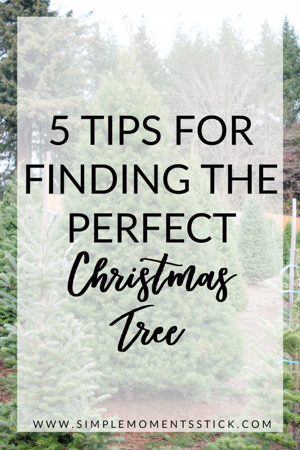 How to find the perfect tree at a Christmas tree farm