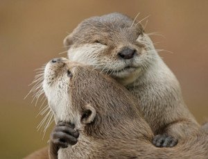 otters love