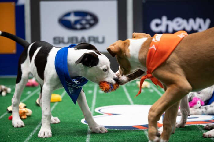 How To Stream The Puppy Bowl