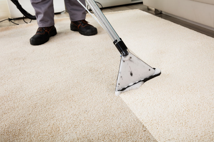 carpet cleaning professional