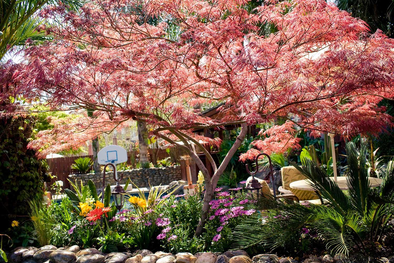Roseville Backyard Landscape Renovation