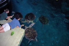 Trainer and student feeding turtles from EZ Dock platform.