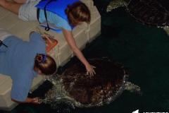 Feeding turtles - EZ dock in an environmentally sensitive area