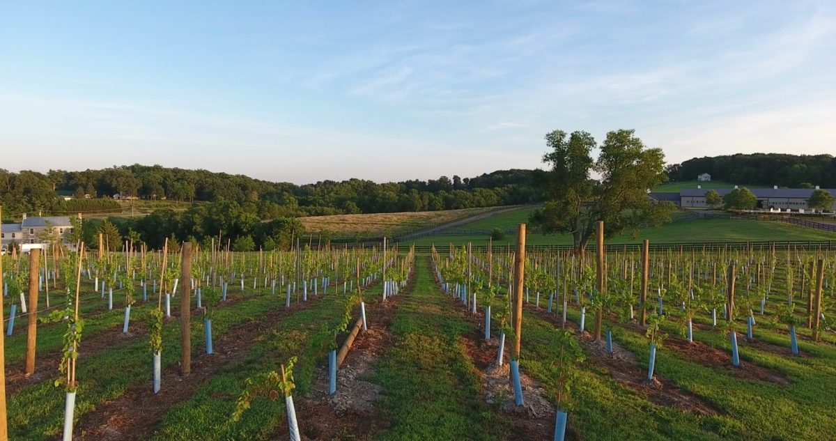 our hidden hills frederick maryland vineyard