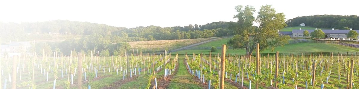 news from our vineyard in frederick md