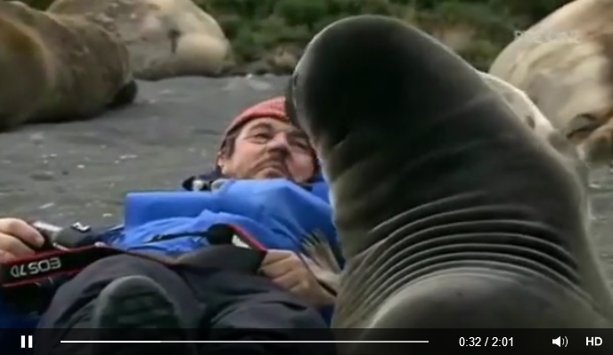 This man gets extremely close to a baby seal, Cuteness overload!