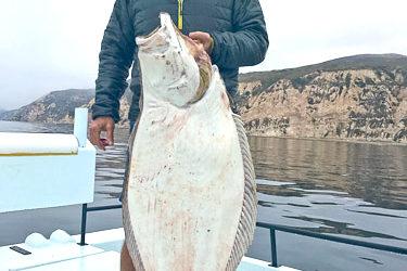 Great Halibut Catch