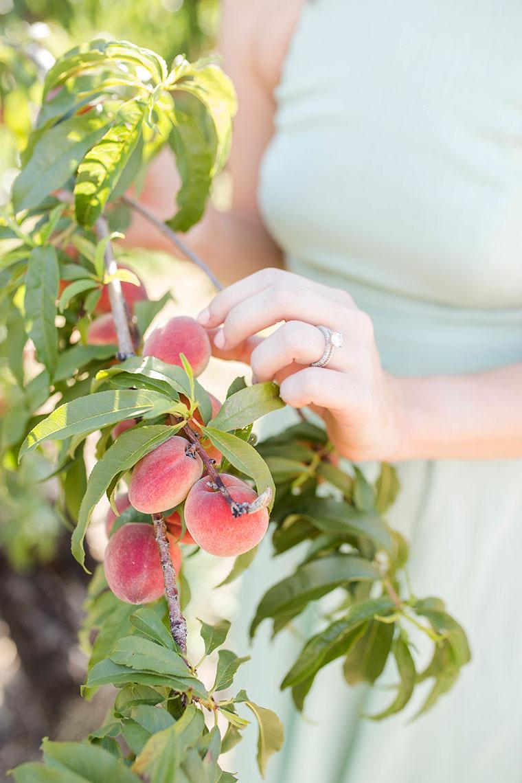 Peach Picking In Fredericksburg 5