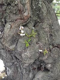 Chestnut Hill Tree Trunk