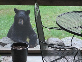 Who Remembers Smokey the Bear?