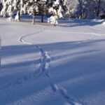 Line of deer trail in snow