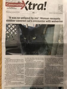 Picture and article about a cat attacked by a wolverine