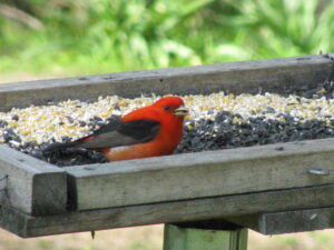 bird on platform feeder