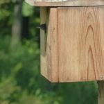 bird looks out birdbox
