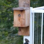 Fledgling underneath nest box.