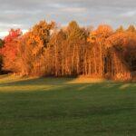 Sun on line of trees