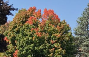 Trees turning color