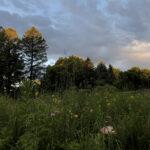 Image trees and sunrise