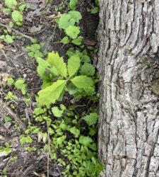 New Oak Signals Hope