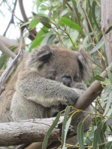 AUSTRALIA, HANSON BAY