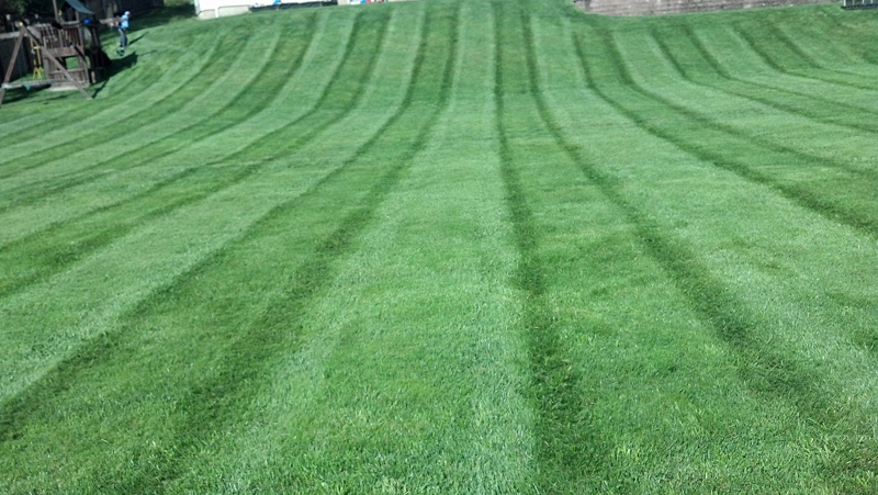 Nice Lawn Pic