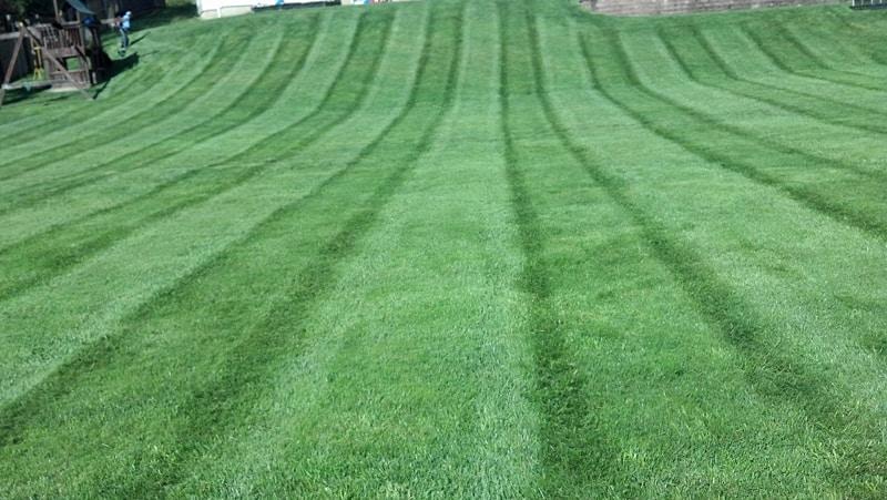 Nice Lawn Pic