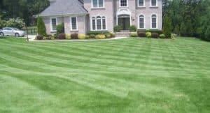bermuda-grass-lawn
