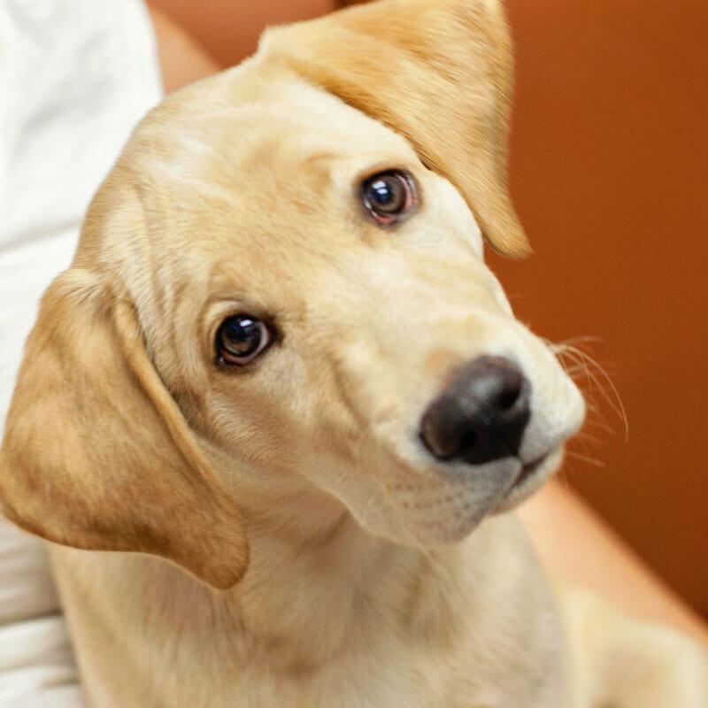 1st Pet Vet Patients-06