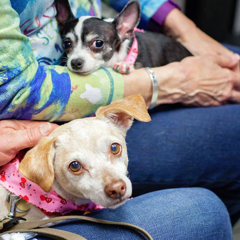 1st Pet Vet Patients-20