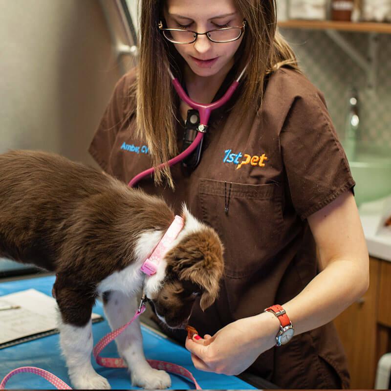 1st Pet Vet Patients-26