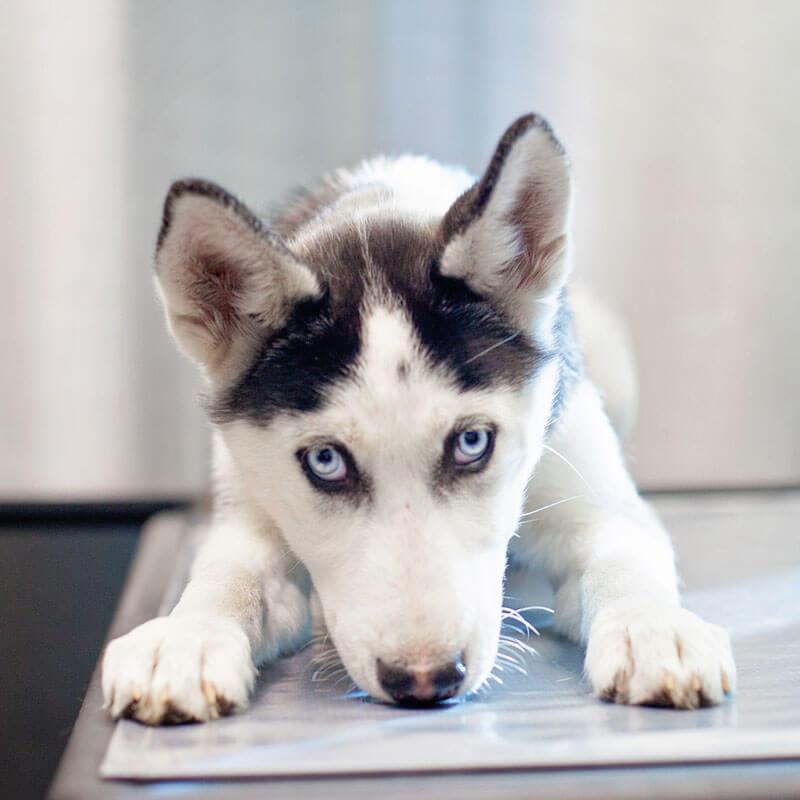 1st Pet Vet Patients-31