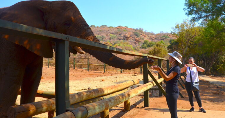 Travel Outtakes: South Africa