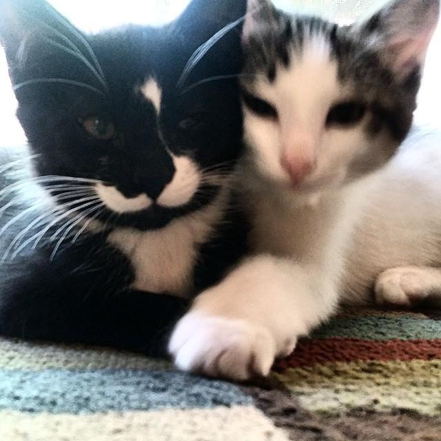 Yin and yang Kittens