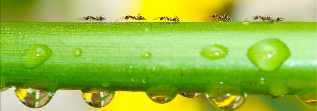 Ants Marching In
