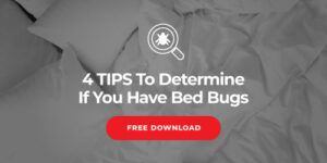 Are Bed bugs More Active during the Warmer Months