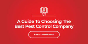 What Steps Can I Take to Prevent Termite Damage