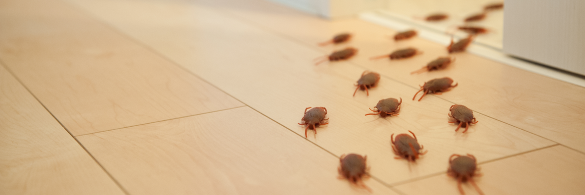 How to Get Rid of a Cockroach Infestation