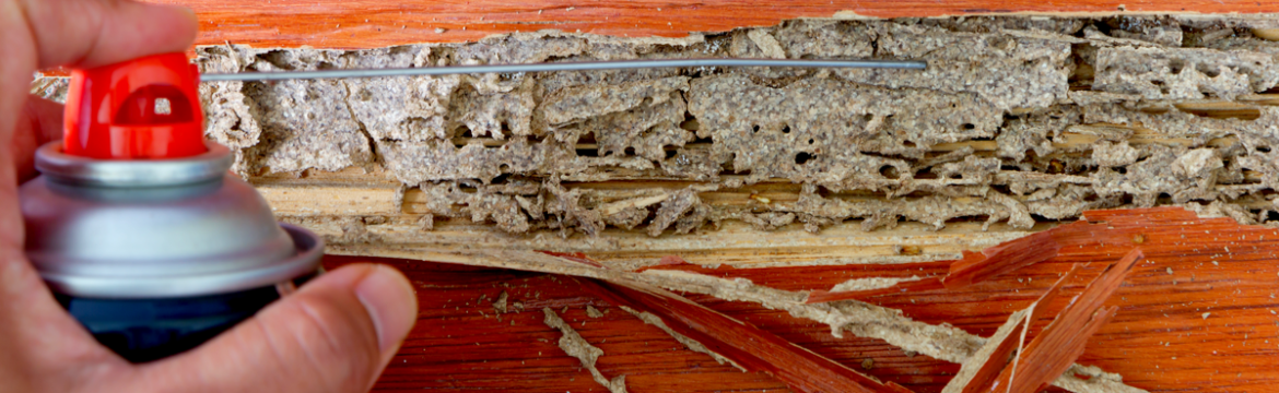 Termite Tips Every Homeowner Should Know