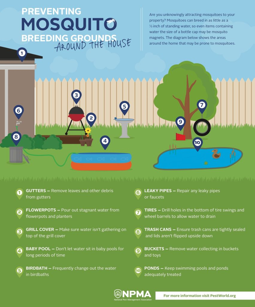 Mosquito Breeding Areas
