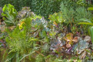 Succulent wall along the pathway into the garden