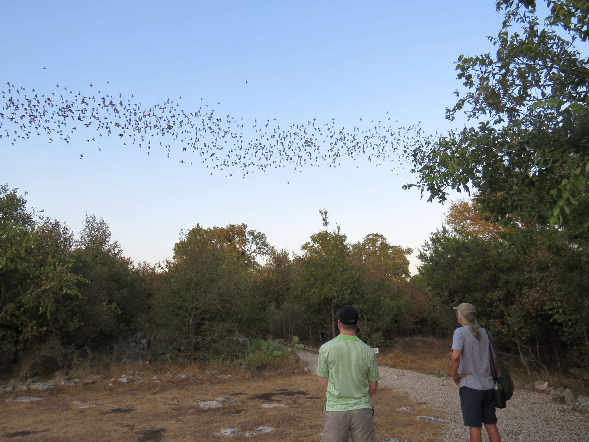 Bats Overhead