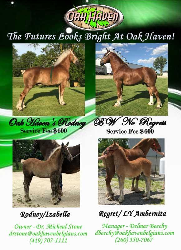 Breeding Foals