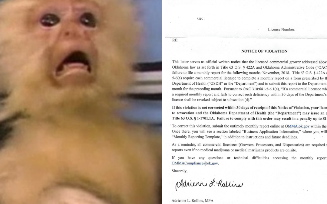 Monkey with scared look because of OMMA Notice of Violation letter
