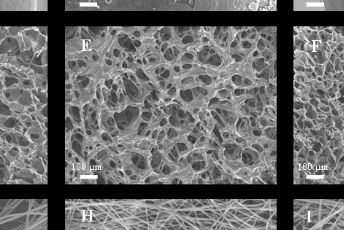 Materials and Methods for Coating Bone Allografts