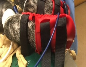 ECG Monitoring Device for Dogs During Surgery