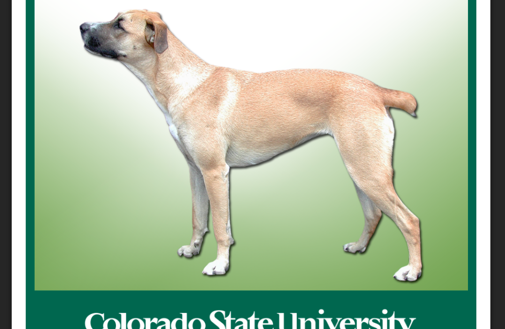 Congratulations to CSU Professor Whalen – Recipient of award for revolutionizing veterinary anatomy