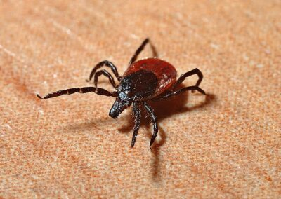 Early Lyme Disease Detection