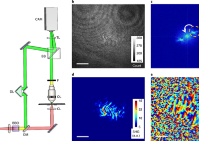Harmonic Optical Tomography of Nonlinear Structures