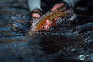 "releasing a rainbow trout in ""Must-Have"" Magnetic Rod Holders There are lovers of the fly fishing sport who have stated that their fishing lives ""really began"" when they purchased"