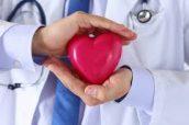 medico sosteniendo un modelo de corazon